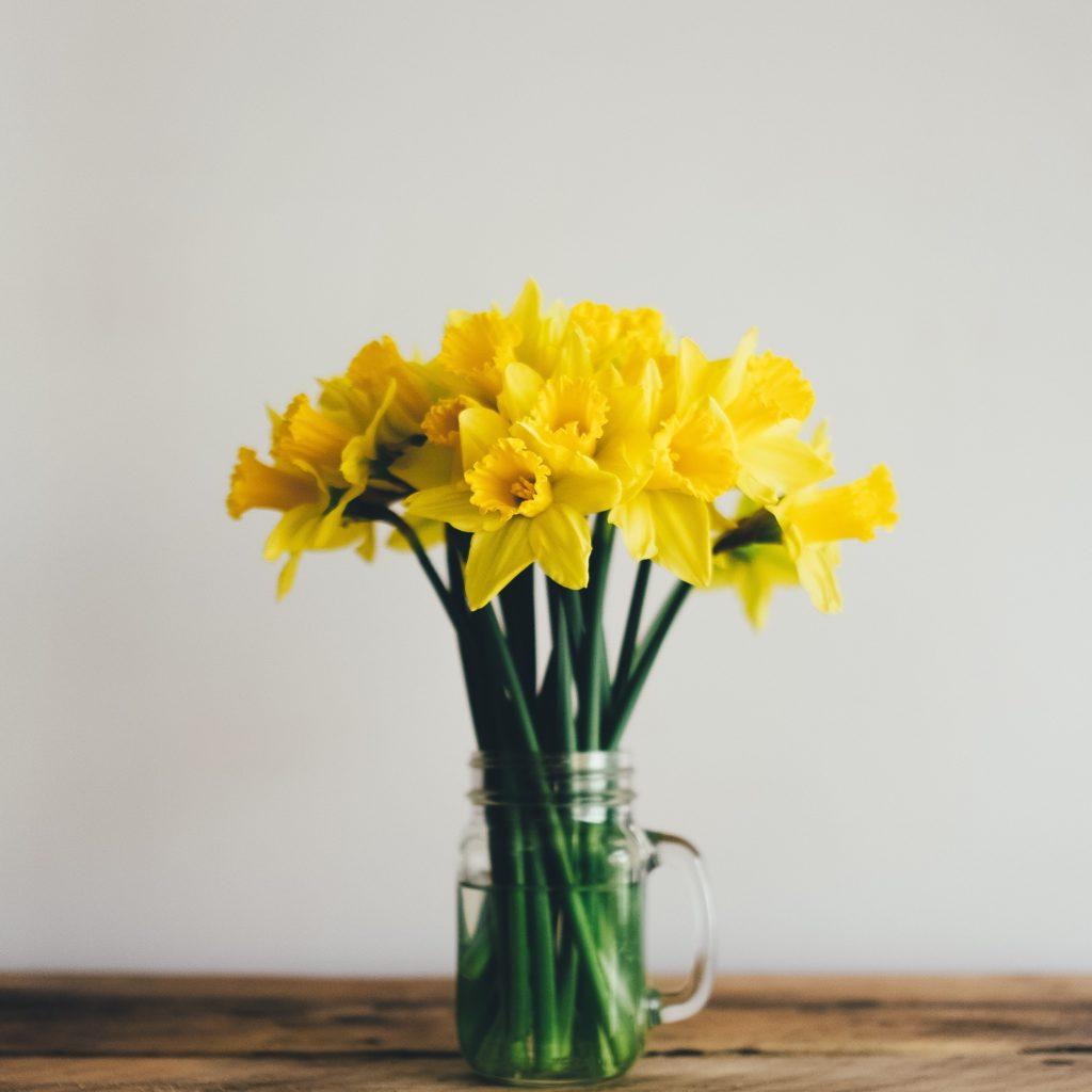 jonquilles québec magog fleurs locales cantons-de-l'est