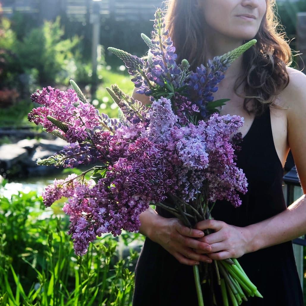 lupins fleurs magog