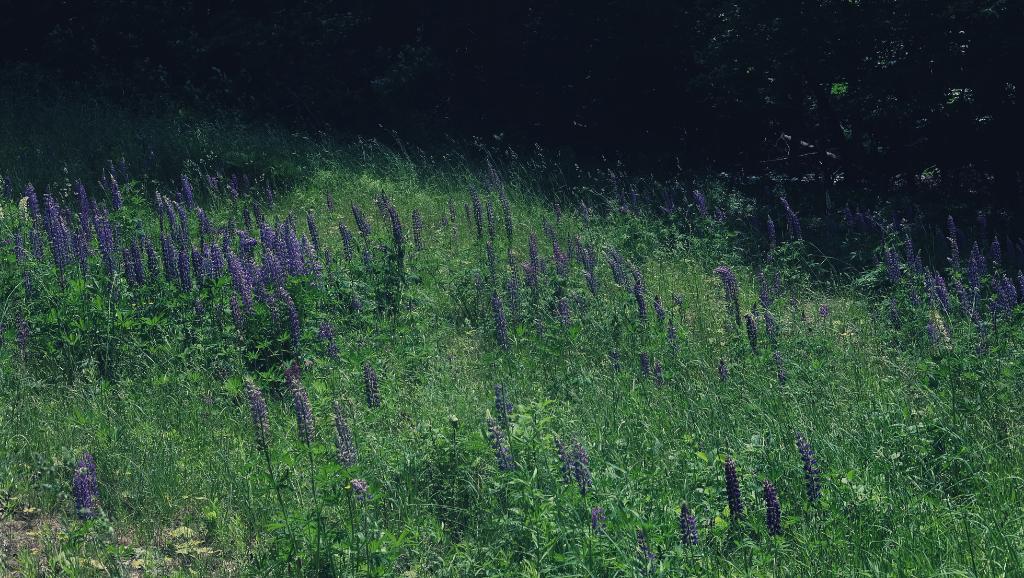 vivre à la campagne cantons-de-l'est québec fleurs
