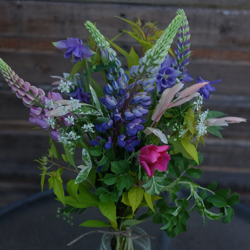 fleurs locales lupins