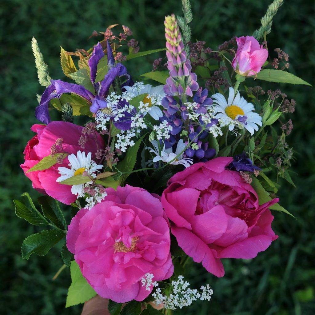 rose lupins Magog bouquet jardin écoresponsable