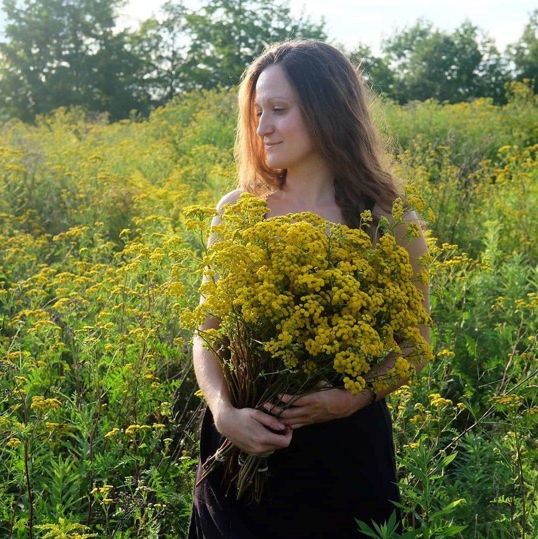 fleurs sauvages - tanaisie - magog