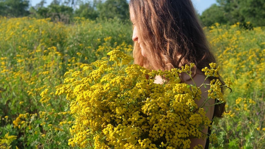 fleurs sauvages tanaisie