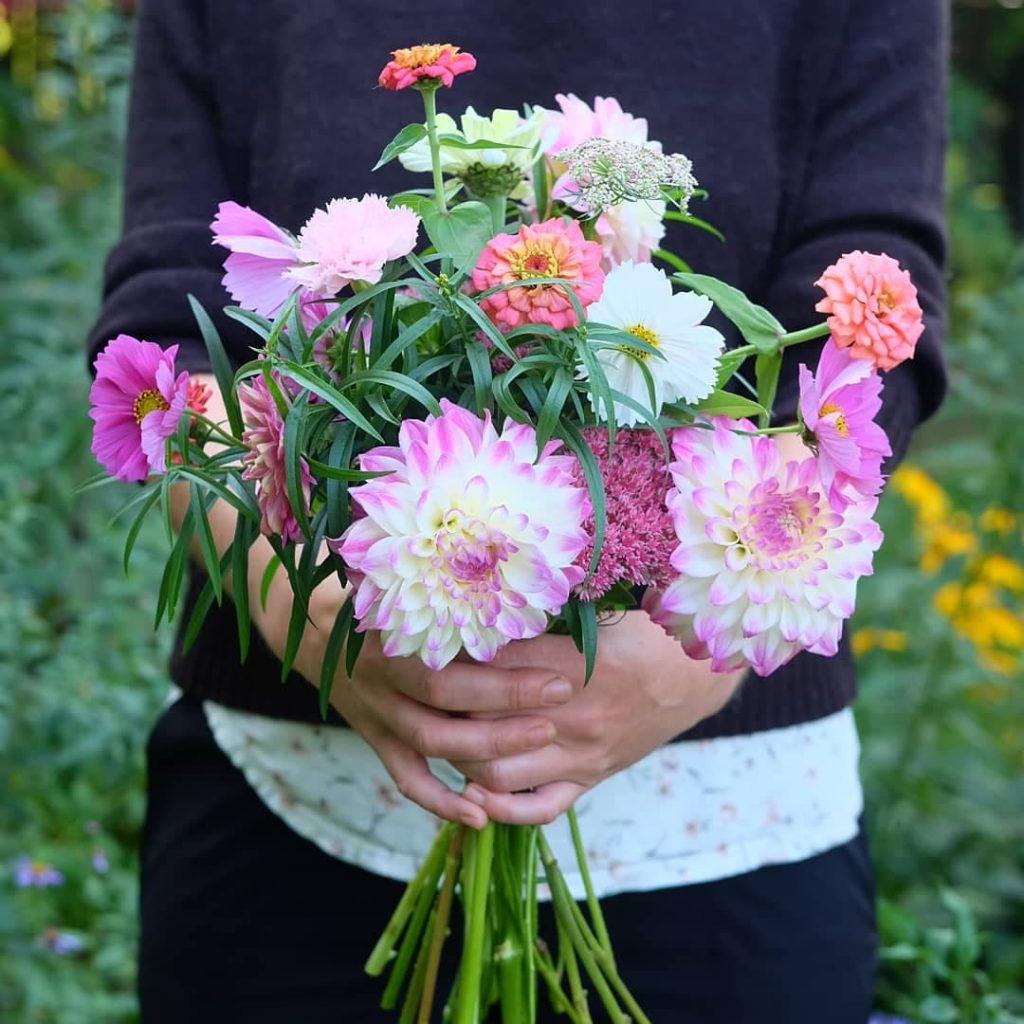 bouquet dahlia fleurs locales magog