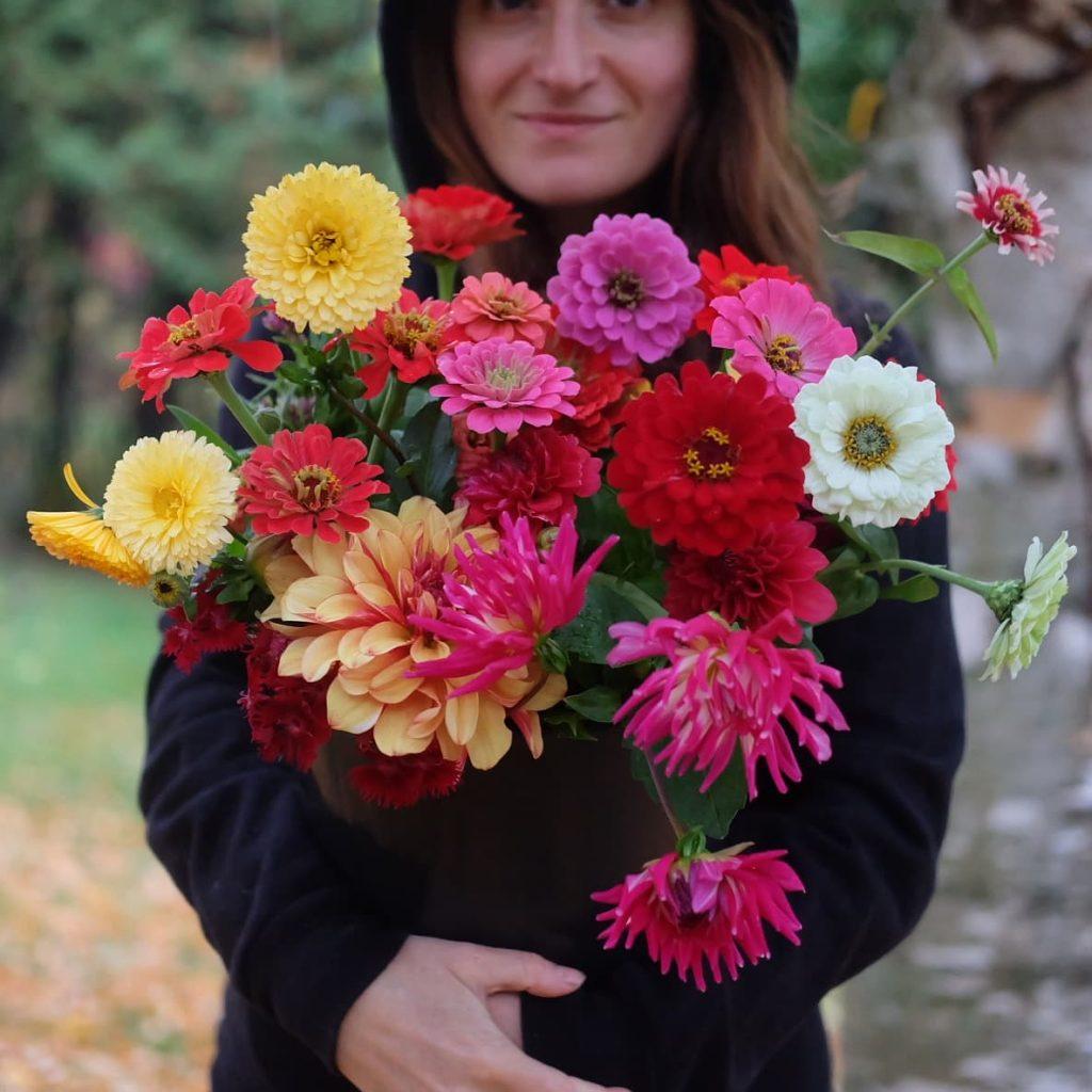 zinnia fleurs locales magog