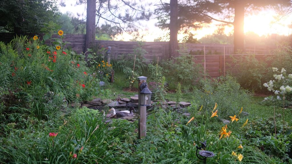 canard permaculture jardin magog