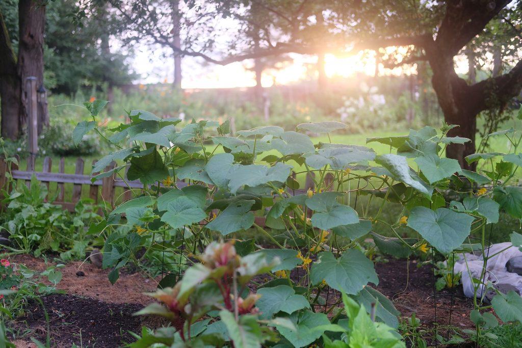 jardin permaculture magog