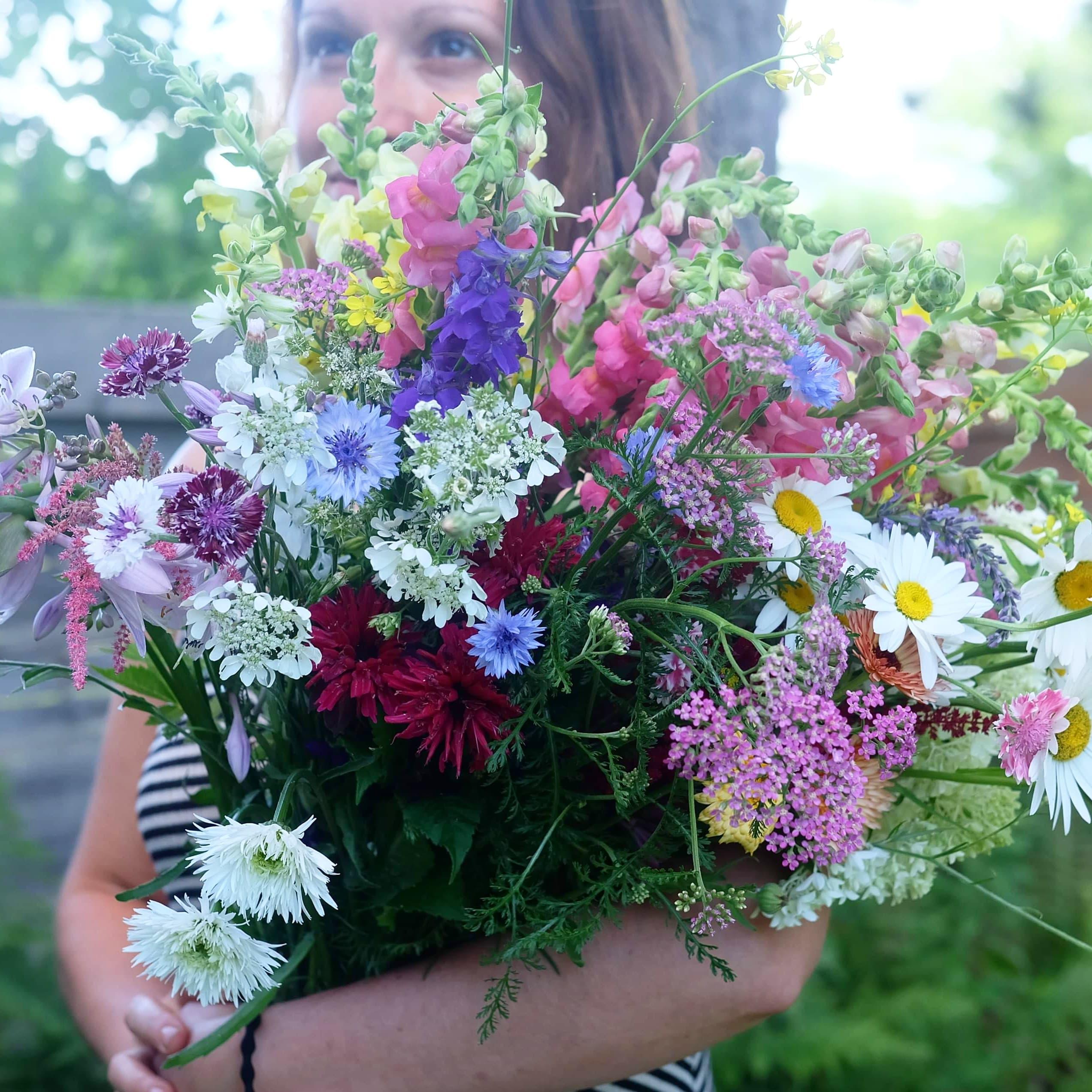 fleurs locales - fleurs annuelles