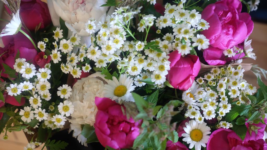 fleurs locales du Québec - pivoines